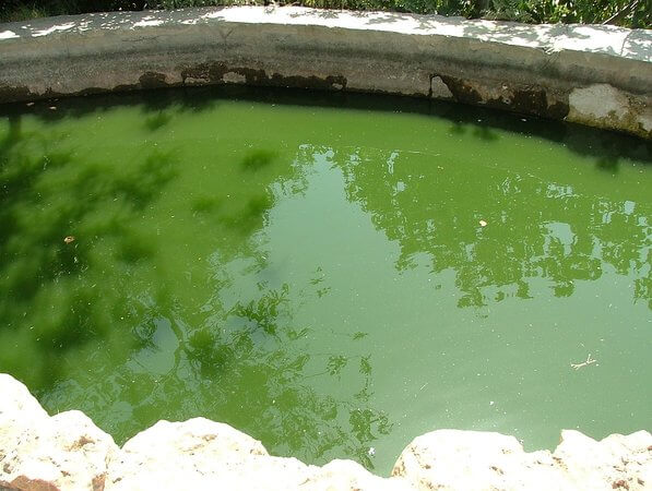 How To Treat Remove Algae From A Pool Blueterra Pool Construction
